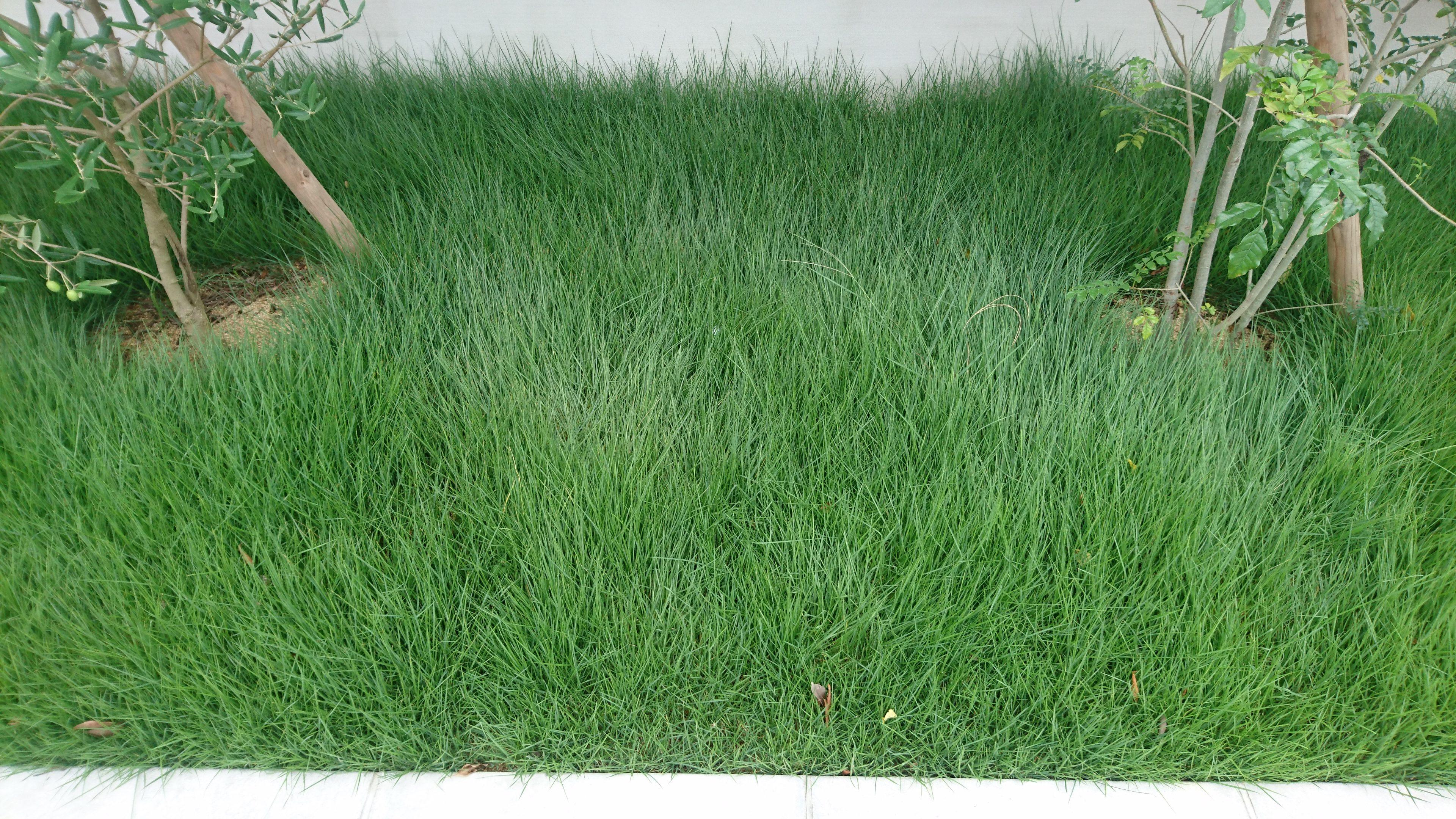 芝刈り。゚(゚´Д`゚)゚。